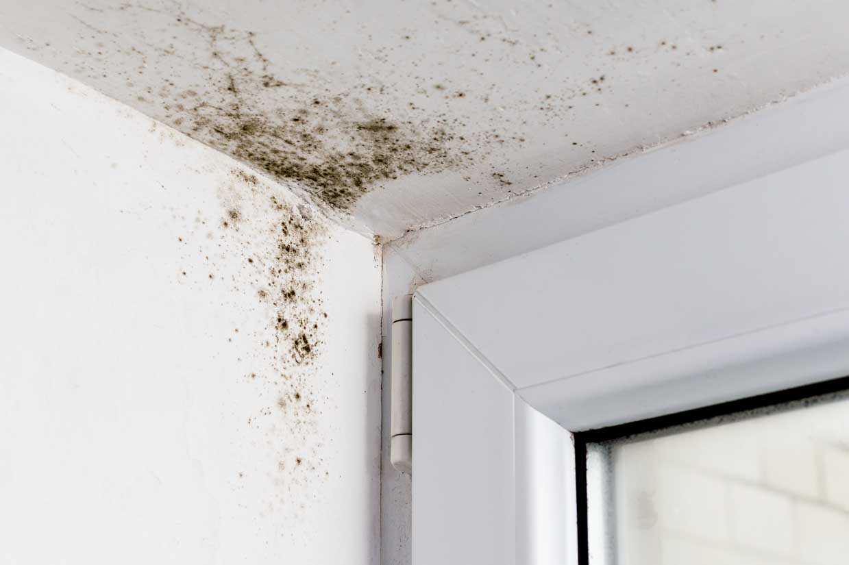 How to prevent Winter Mould issues